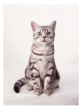 Finnegan the Cat I Wall Decal