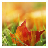 Red Leaf on Grass Wall Decal