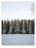 Winter Forest III Wallsticker