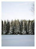 Winter Forest III Wall Decal