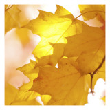 Autumn Leaves in Soft Sunshine III Wall Decal