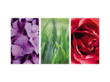 Floral Triptych Wall Decal