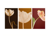 Dancing Tulips Triptych Wall Decal