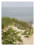 Sandy Dune with Vetch and Grasses Wall Decal