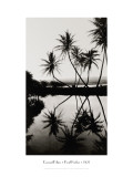 Coconut Palms, Pearl Harbor, Hawaii, 1927 Wall Decal