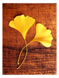 Yellow Ginkgo Leaves Wall Decal