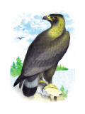 Golden Eagle, Ring-Tailed Eagle Wall Decal by Theodore Jasper