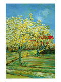 Orchard with Cypress Wallstickers af Vincent van Gogh