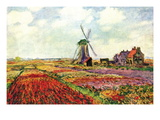 Tulips of Holland Wall Decal by Claude Monet