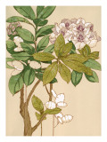 Magnolia Tree Flowers Wall Decal
