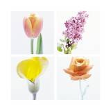 Pastel Stems Four Patch Wallstickers