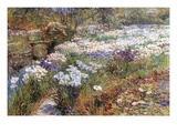 Water Garden Wall Decal by Childe Hassam