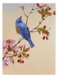 Modrý pták na třešňové větvičce Lepicí obraz na stěnu