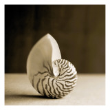 Sea Shells III Wall Decal