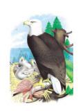 The Bald Eagle Wallsticker af Theodore Jasper
