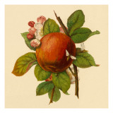 Apple and Bees Wall Decal