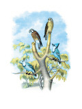The Sparrow Hawk Wall Decal by Theodore Jasper