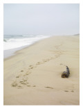 Footprints on Tranquil Beach Wall Decal