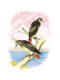 Red-Tailed Hawks Wall Decal by Theodore Jasper