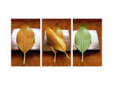 Leaves Arrangement Triptych Muursticker