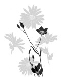 Greyscale Print of Flowers Vinilo decorativo
