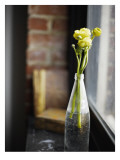 Buttercups at Window Wall Decal