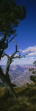 Tree at the Edge of a Canyon, Grand Canyon National Park, Arizona, USA Wall Decal by  Panoramic Images