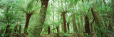 Trees in a Forest, Franklin Gordon Wild Rivers National Park, Tasmania, Australia Wall Decal by  Panoramic Images