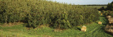 Trees in a Field, Grand Rapids, Michigan, USA Wall Decal by  Panoramic Images