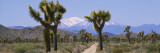 Dirt Road Passing through a Landscape, Queen Valley, Joshua Tree National Monument, California, USA Wall Decal by  Panoramic Images