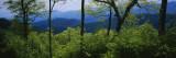 Great Smoky Mountains National Park, Tennessee, USA Autocollant mural par Panoramic Images
