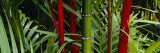 Bamboo Trees, Hawaii, USA Muursticker van Panoramic Images