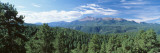 Trees in Front of Pikes Peak Mountain, Pikes Peak National Forest, Colorado, USA Wallstickers af Panoramic Images