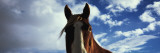 Horse, Montana, USA Wall Decal by  Panoramic Images