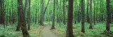 Walkway Running through a Forest, Black River National Forest, Michigan, USA Wall Decal by  Panoramic Images