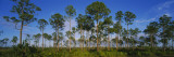 Trees on a Landscape, Everglades National Park, Florida, USA Wall Decal by Panoramic Images 