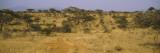 Trees on a Landscape, Samburu National Reserve, Kenya Wall Decal by  Panoramic Images