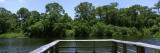 Trees on River Side Viewed from a Balcony, Oscar Scherer State Park, Sarasota, Florida, USA Wall Decal by  Panoramic Images