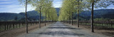 Trees on Both Sides of a Road, Napa Valley, California, USA Wall Decal by  Panoramic Images