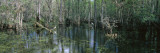 Water in the Dense Tropical Forest, Big Cypress National Preserve, Florida, USA Wall Decal by  Panoramic Images