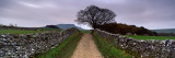 Stone Walls Along a Path, Yorkshire Dales, England, United Kingdom Wall Decal by  Panoramic Images