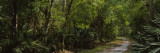 Path in a Forest, Fox'S High Road, Myakka River State Park, Sarasota, Florida, USA Wall Decal by  Panoramic Images