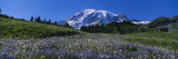 Wildflowers on a Landscape, Mt. Rainier National Park, Washington State, USA Wall Decal by  Panoramic Images