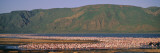 Flock of Birds in a Lake, Lake Bogoria National Park, Kenya, Africa Wall Decal by  Panoramic Images
