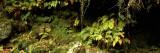 Close-up of Plants, Eller Beck, Goathland, North Yorkshire, England, United Kingdom Muursticker van Panoramic Images,