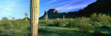 Saguaro Cactus in a State Park, Picacho Peak State Park, Arizona, USA Wall Decal by  Panoramic Images