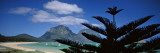 Panoramic View of a Coastline, Lord Howe Island, Australia Wall Decal by  Panoramic Images
