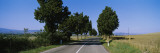 Trees along a Road, Tuscany, Italy Wall Decal by  Panoramic Images