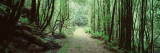 Trees along a Trail, Rain Forest Trail, Wild Rivers National Park, Australia Wall Decal by  Panoramic Images