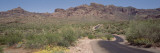 Cactus along a Road, Dreamy Draw Park, Arizona, USA Wall Decal by  Panoramic Images